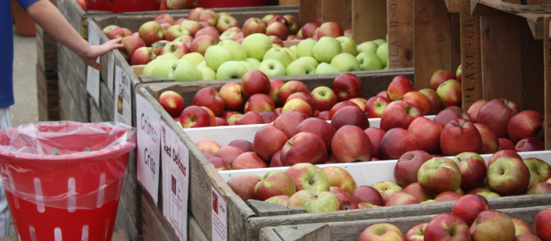 highland_orchards_apple_gallery_5