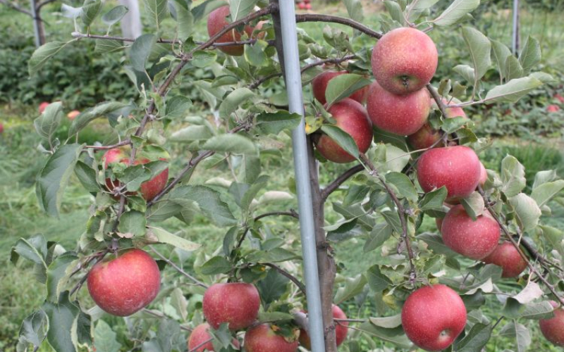 highland_orchards_apples_pick_your_own