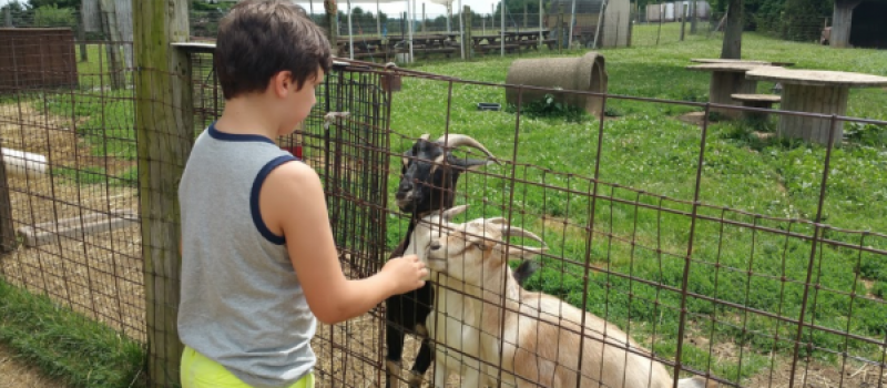 Highland_orchards_reviews_petting_zoo_goats