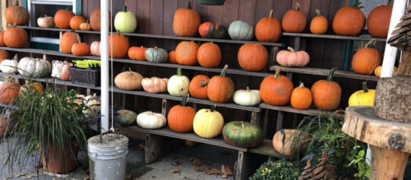highland_orchards_outdoor_market_pumpkins